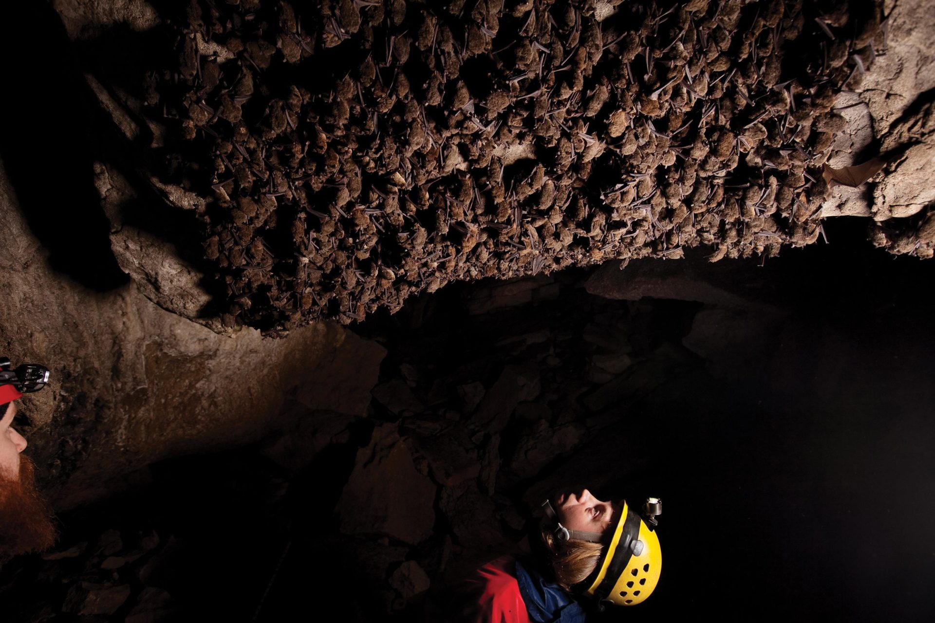 Bats in a Tennessee cave are inspected for white-nose syndrome. Photo by Stephen Alvarez/National Geographic Creative